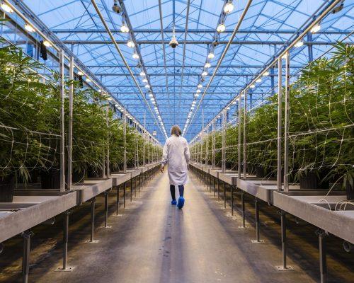WeGROW makes Cannabis Products Accessible
